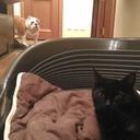 Когда кот отжал место...